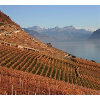 Peak Performance: Mountain Wines thumbnail