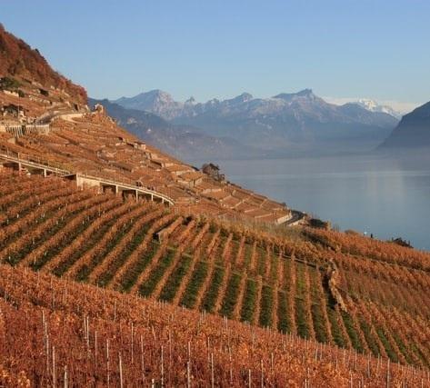 Peak Performance: Mountain Wines Image 1