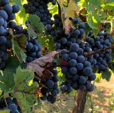 Mix it Up: Bordeaux Blends Abroad Image 1